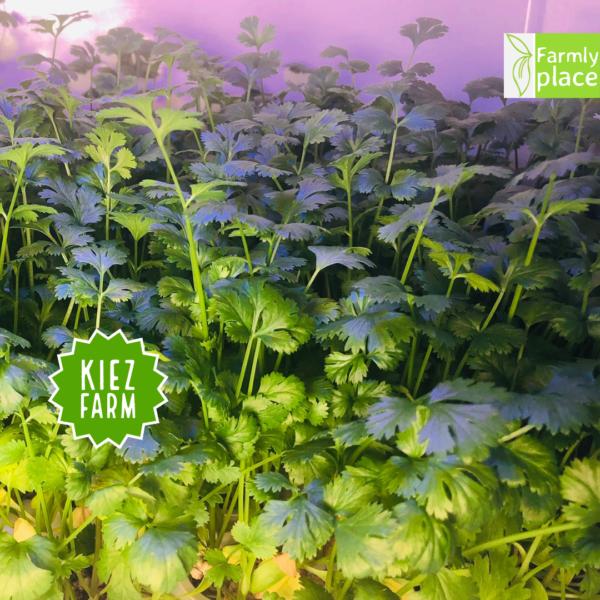 Kiezfarm - Asian Box mit Koriander