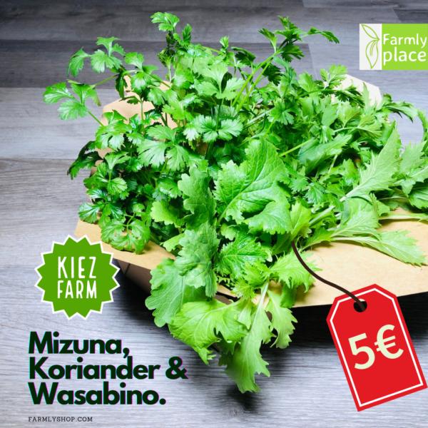 Kiezfarm - Asian Box mit Mizuna, Koriander, Wasabino